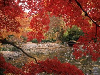 обои Садовый пруд осенью, под багровыми листьями ветвей фото