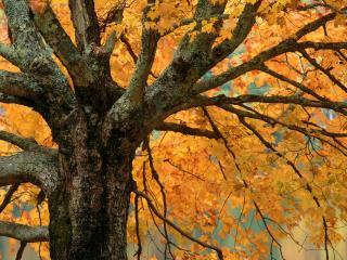 обои Autumn Light, Great Smoky Mountains, Tennessee фото