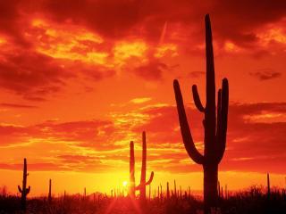 обои Кактусы на фоне заката фото