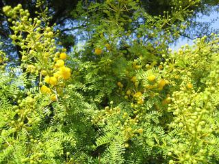 обои Растения Туниса фото