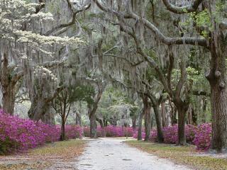 обои Деревья и розовые цветочки фото