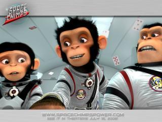 обои Обезьяны в космосе фото