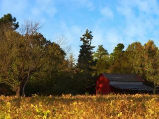 обои Ранчо в лесу фото