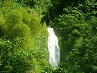 обои Водопад в лесу фото
