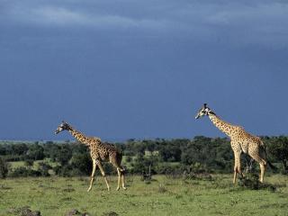 обои Самые высокие на земле фото