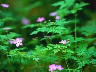 обои Цветы в лесу фото
