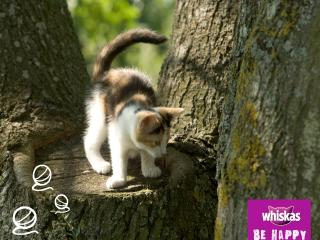 обои Whiskas. котенок на пеньке фото