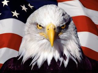 обои Орел и Американский флаг фото