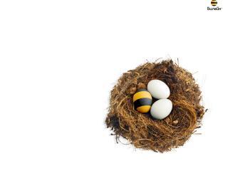 обои Яйца - Билайн фото
