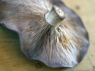 обои Шляпка гриба фото
