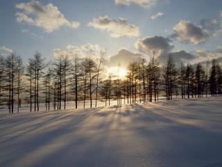 обои Зимний закат на фоне леса фото