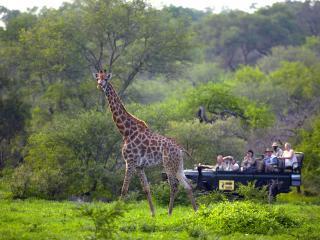 обои Mala Mala Giraffe фото