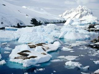обои Crab-Eater Seals, Peterman Island, Antarctic Peninsula фото