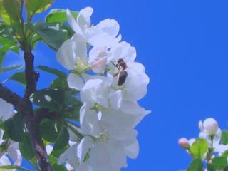 обои Пчёлка на цветке фото