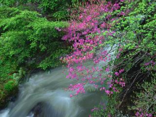 обои Весенний ручей в саду, под ветвью цветущего дерева фото