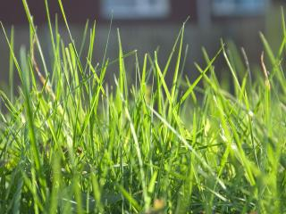 обои Молодая трава фото