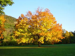 обои Дерево в осеннем наряде фото