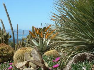 обои Кактусовый сад фото