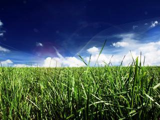 обои Трава на поле фото