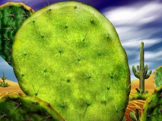 обои Кактус в пустыне фото