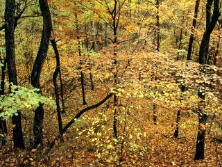 обои Autumn Forest, Percy Warner Park, Nashville, Tennessee фото