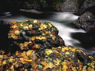 обои Камни покрытые осенними листьями у ручья фото