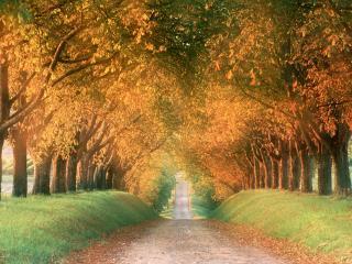 обои Осенняя дорога, регион Коньяк, Франция фото