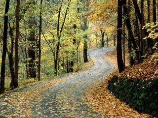 обои Осенняя дорога, Парк Перси Уорнер,  Нэшвилл, штат Теннеси фото