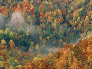 обои Colorful Autumn Forest, Great Smoky National Park, Tennessee фото