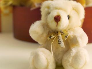 обои Милый Teddy фото