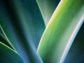 обои Утренняя трава фото