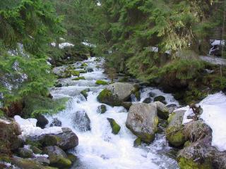 обои Бурный бегущий ручей, в летнем лесу фото