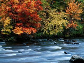 обои Осенний ручей, вдоль раскрашенных крон деревьев фото