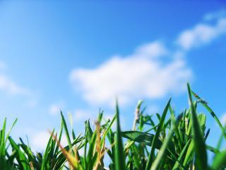обои Травка под голубым небом фото