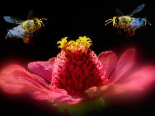 обои Пчёлы за работой фото